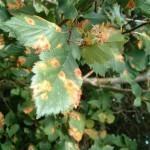 Инфекционные заболевания растений