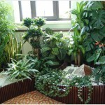 Комнатные растения — друзья и враги