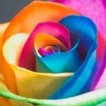 Что можно вылечить цветом?
