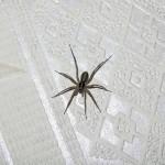 Почему запрещается убивать пауков в доме?