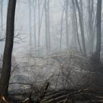 Минприроды: число опасных природных явлений за 10 лет может удвоиться