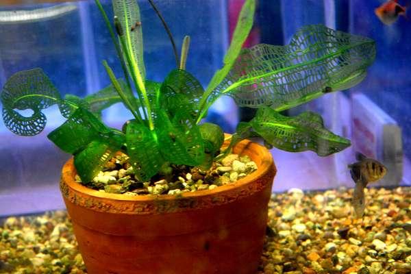 Посадка водных растений в горшочки