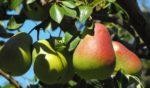 Медики назвали эффективный фрукт для профилактики рака